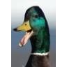 duckcmdr