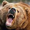 beardawg