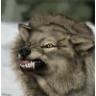 waterwolf603