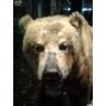 bearclaw1