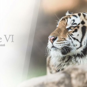 Rest in peace Mike VI