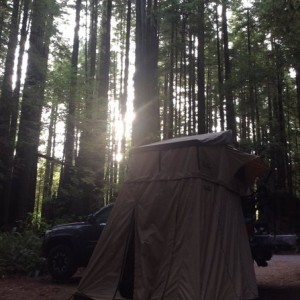 Red Woods Near Eureka CA