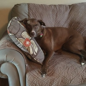 Spoiled dogs know how to use pillows.