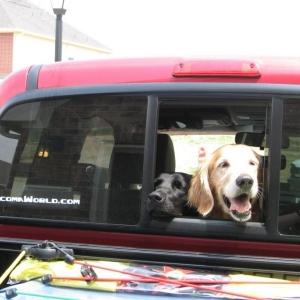 Porsche and Zoe in the Tacoma