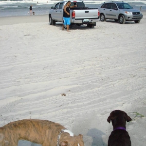 Wow! That truck is cool! says brown dog to other dog.