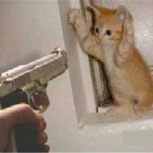 Cat_busted1