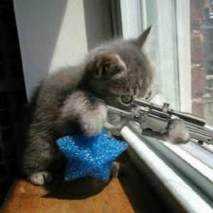 cat-machinegun