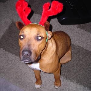 Bruce the reindeer