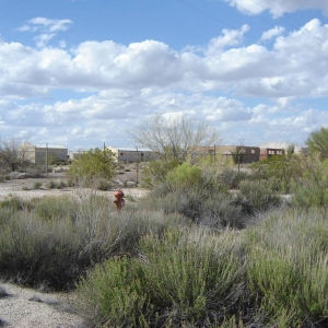 Arizona Mystery Compound Search