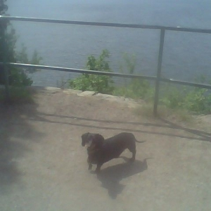Simon's daily walk down at lake champlain