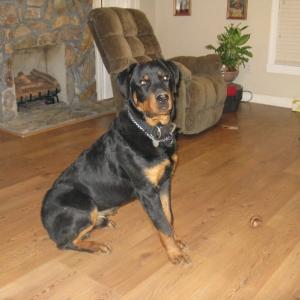 123 lbs., Cain: Trav's_LiL_Puppy