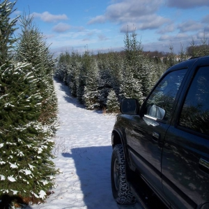 X-mas Tree Shopping