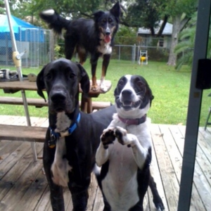 Diesel with other puppies