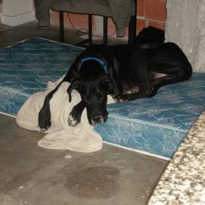 Diesel on his mattress