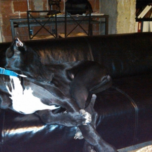 Diesel on his couch