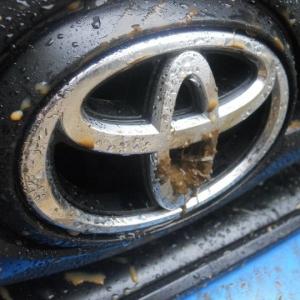 Muddy Emblem