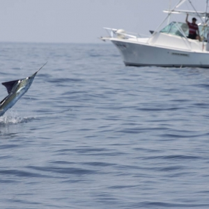 JP Sportfishing - Quepos Costa Rica 3/26/11