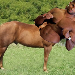 horsereem