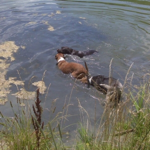Taking a dip!