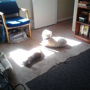 Sunning in the house