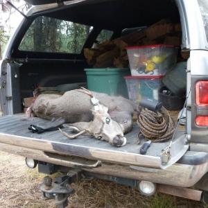 Deer_Hunt_2011