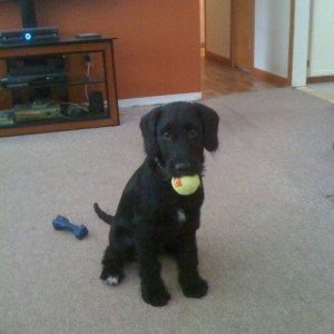 Woofie with his ball