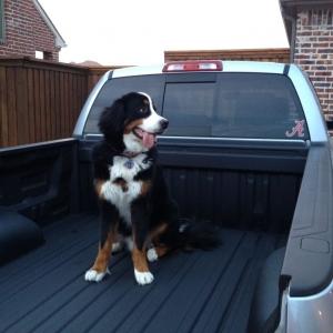 My dog Ranger