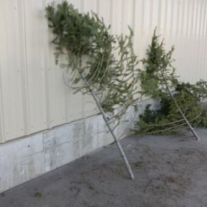 Saddest little Christmas trees...