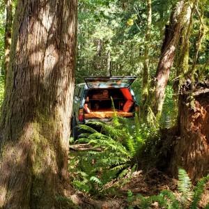 Tacoma Jungle Close