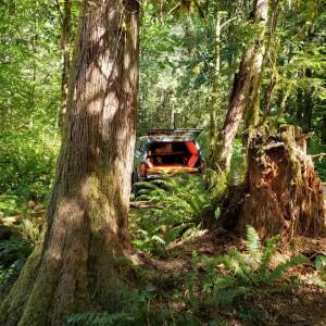 Tacoma Jungle Far