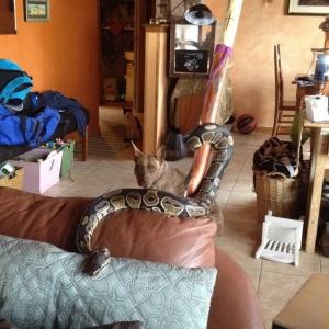 skitzo the snake
