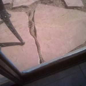 snake wranglin