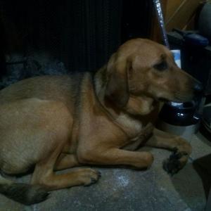 The new rescue pup. Ida