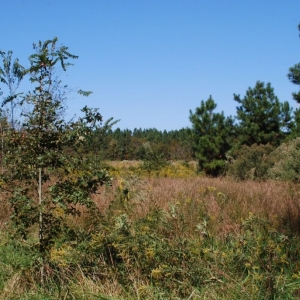 Just made an offer on 63 acres of land. Crossing my fingers and toes...