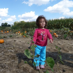 pumpkin farm hilliard ohio