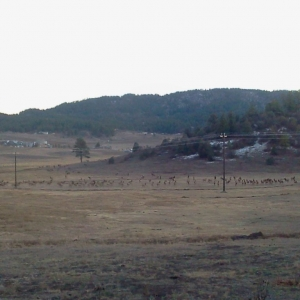 Spotted a 'few' elk on the way into town This picture message or