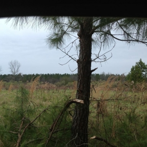 Last day of the whitetail season (in the rain).