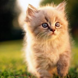 cute-cat-