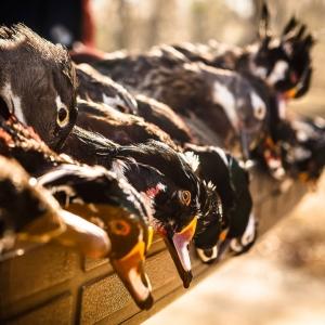 Tailgate shot after morning hunt