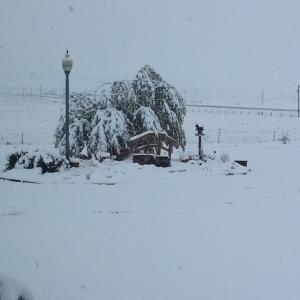 Jeezus... some super heavy snow