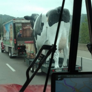Had I rear-ended this truck, it would have been udder destruction!