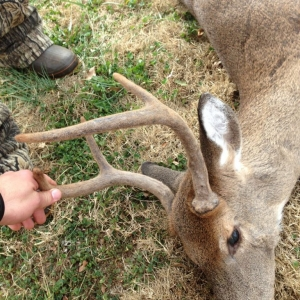 Velvet buck in November!!! Well actually it was a doe with horns. Crazy rig