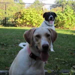 Rocco & Lyla