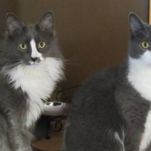 Murphy & Tessie