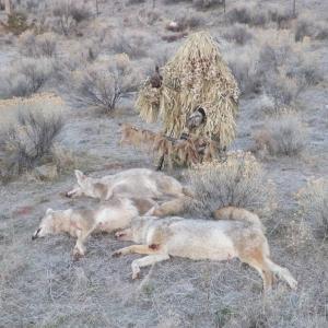 2014 Predator hunting