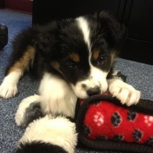 FAT - new puppy