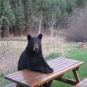welfare-bear-bearack-obearma