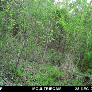 Someone say bear? Game cam pic from family land in va