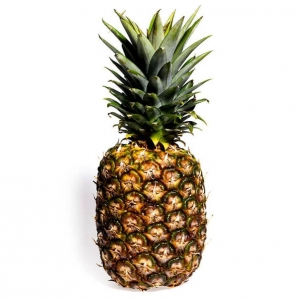 pineapplefacts20n-1-web_1_
