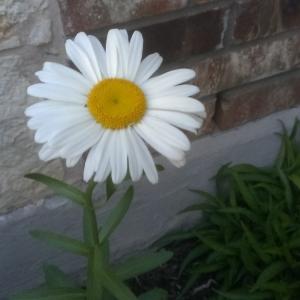 Blooming!
